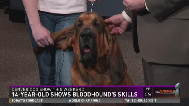 Thousands of dogs compete in the Denver Dog Show