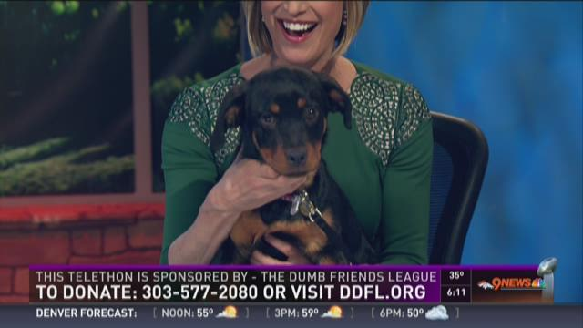 Puppies on the anchor desk