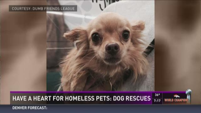 Have a heart for a homeless pet