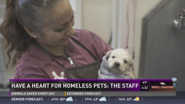 Have a heart for homeless pets