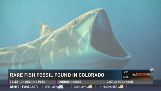 Rare fish fossil found in Colorado