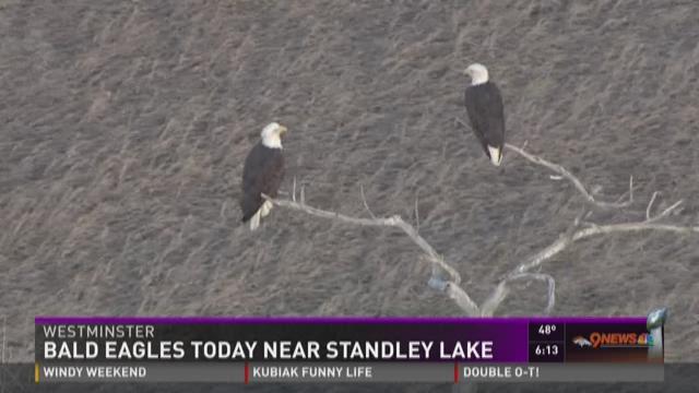 Sky9 spots bald eagles at Westminster park