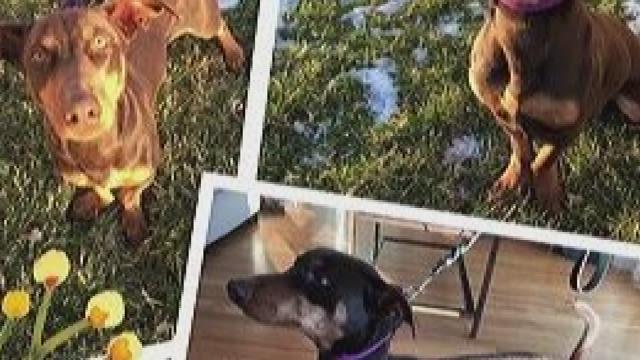 Petline9: Dog needs a new home