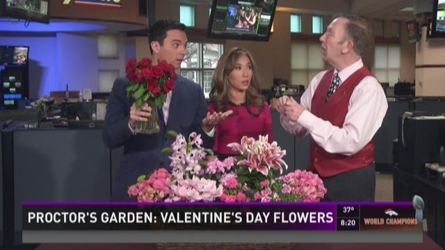 Proctor: Lovely living flowers for your valentine