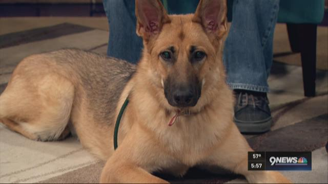 Petline9: Molly loves playing with toys