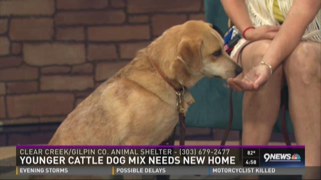 Petline9: Callie the cattle dog enjoys hiking