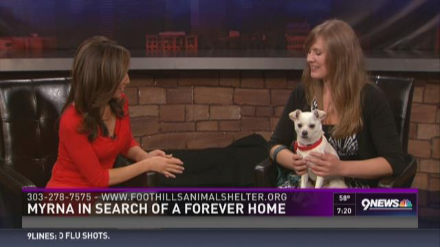 Myrna in search of a forever home